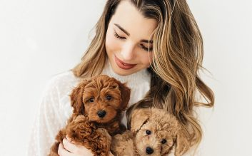 Toy Goldendoodle puppies
