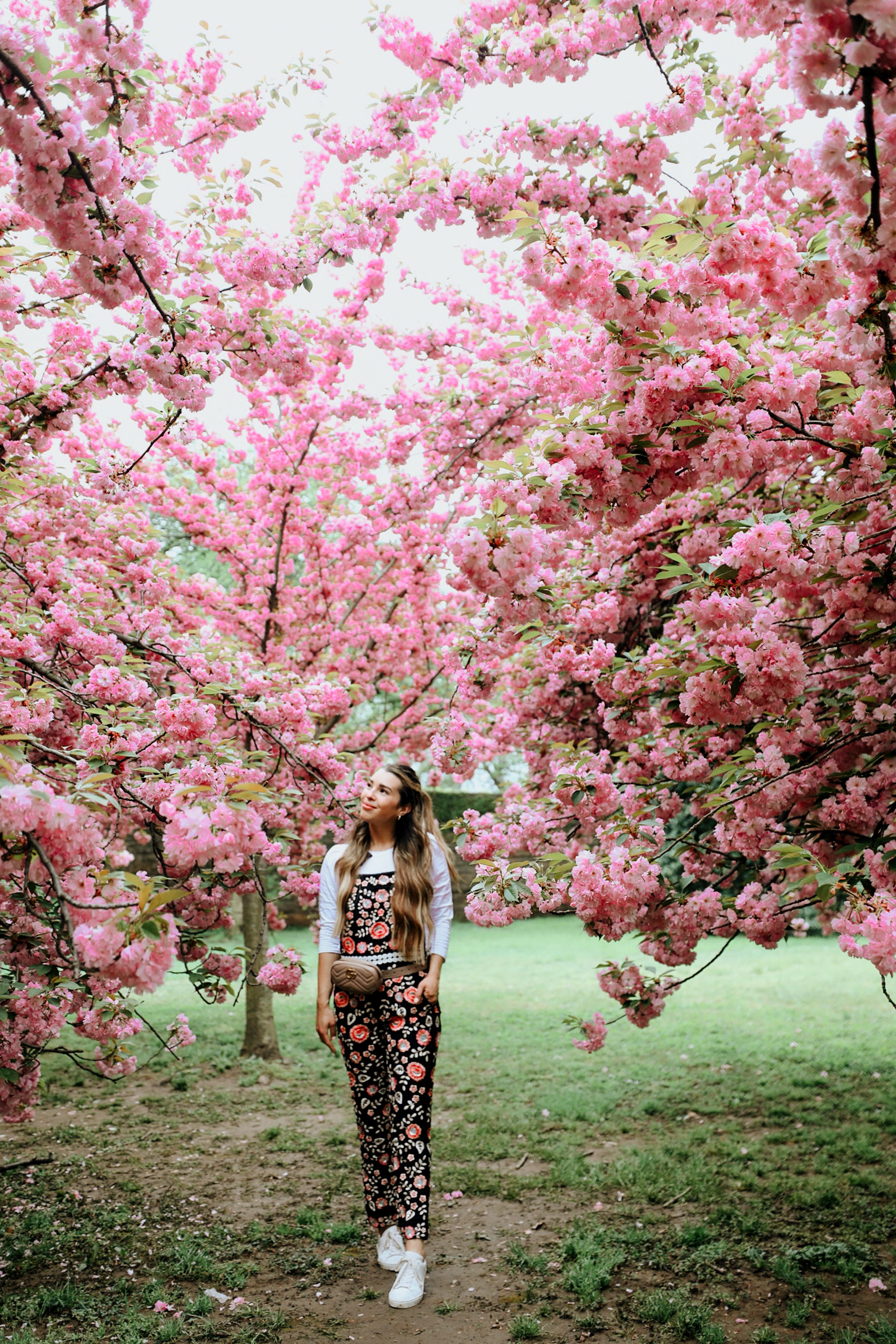 Washington D.C. Travel Guide - Cherry Blossoms